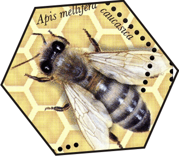 how is apis mellifera caucasica