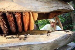 where can we buy jara honey